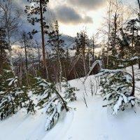 Один зимний день. :: Сергей Адигамов