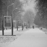 В парке :: Игорь Стародубец