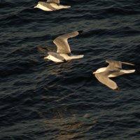 Чайки :: Роман Маркин