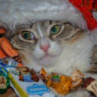 Ох уж эти праздники... :: Светлана