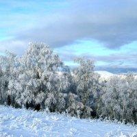 Зимние Березы :: Константин Филякин