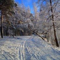 Наш парк :: Анатолий