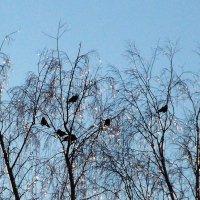 Семь птичек на счастье :: Фотогруппа Весна.