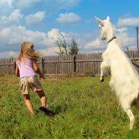 Идет коза рогатая, за малыми ребятами... :: Сергей Михайлов