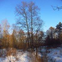 В Москве - рождественские морозы Img_9284 :: Андрей Лукьянов