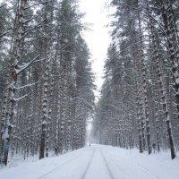 Зимний лес :: Рамиль Шаяхметов