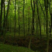 В  Крылосском  лесу :: Андрей  Васильевич Коляскин