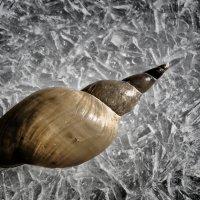 Улитка на льду :: Олег Плотников