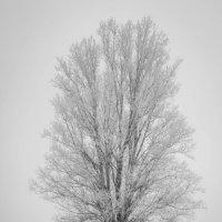 """""""...Нивы печальные,снегом покрытые.."""" :: Андрей Нибылица"""
