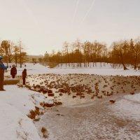 Гатчинский парк. Мороз. :: Валерия Яскович