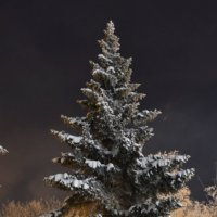 зимняя сказка :: карина полякова