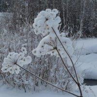 Цветы зимы :: Галина