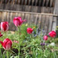 Цветы :: Рамиль Шаяхметов