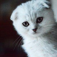 cat :: Annette Miller