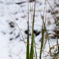 Зимняя трава :: Alice Darling