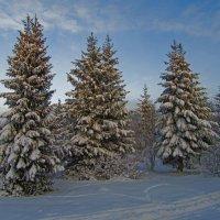 Зимний лес :: Анатолий