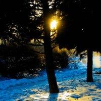 зимний день :: Tanya Borokhta