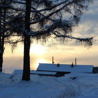 Зотолотая зима :: Мария Дроговоз
