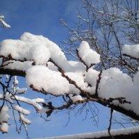 Шапки снега :: Татьяна Пальчикова