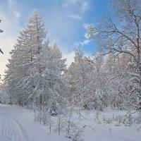 Белое безмолвие :: vladimir Bormotov