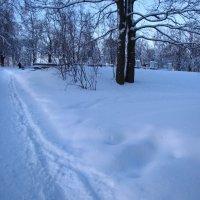 Куда ведёшь, тропинка снежная... :: Самохвалова Зинаида