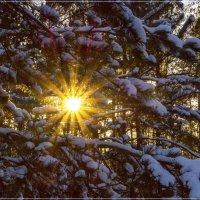 Зимние солнце :: Андрей Дворников