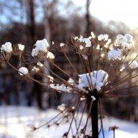 В лесу :: Евгения Каравашкина