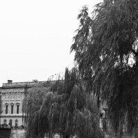 прогулка по Сене :: Дарья Мерзлякова