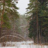 Рождественская метель :: Елена Решетникова