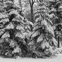 Графика зимы. :: Николай Кондаков