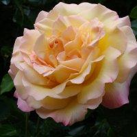 В Никитском ботаническом саду (г.Ялта) :: Наталья