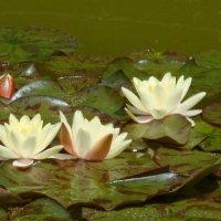 Никитский ботанический сад :: Наталья