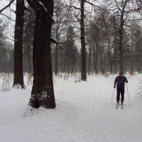 IMG_9632 - Снова не цветная зима :: Андрей Лукьянов