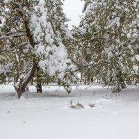 Шапки снега.... :: Юрий Стародубцев