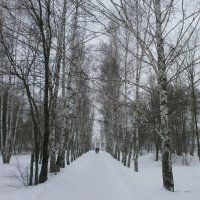 Зимние аллеи... :: Алёна Савина