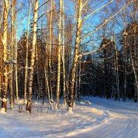 Берёзок солнечные струны... :: Лесо-Вед (Баранов)