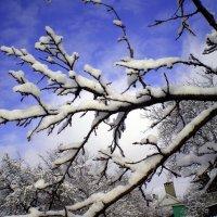 Снежный день :: Татьяна Пальчикова