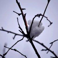 снежная птица на ветке :: Игорь Попов