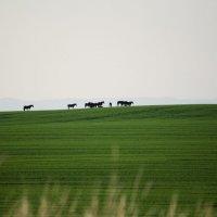 Ходят кони :: Сергей Щербаков