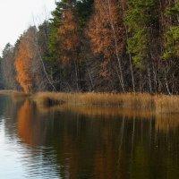 Осенний брег :: Ольга Чистякова