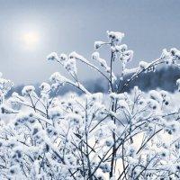 Зимний день 2 :: Валерий Талашов