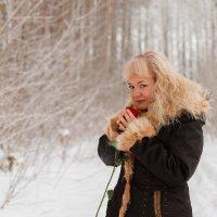Роза на снегу (11) :: Алексей Волков