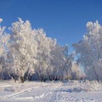 Хрустальный лес :: Татьяна Ким