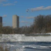 Замёрзший водопад на р. Хамбер (Торонто) :: Юрий Поляков