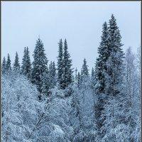 Ноябрь в архангельских лесах. :: Владимир Прынков