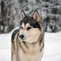 мои собаки :: Анастасия Иноземцева