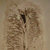 дерево :: tgtyjdrf
