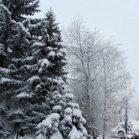 Снегом занесенные :: Нина Синица