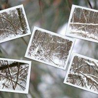 Чудеса в зимнем лесу... :: Тамара (st.tamara)