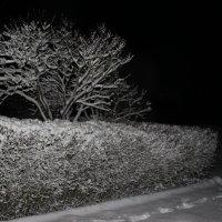 Январская ночь :: Mariya laimite
